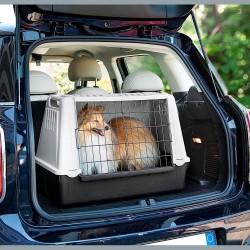 Koerapuurid autosse