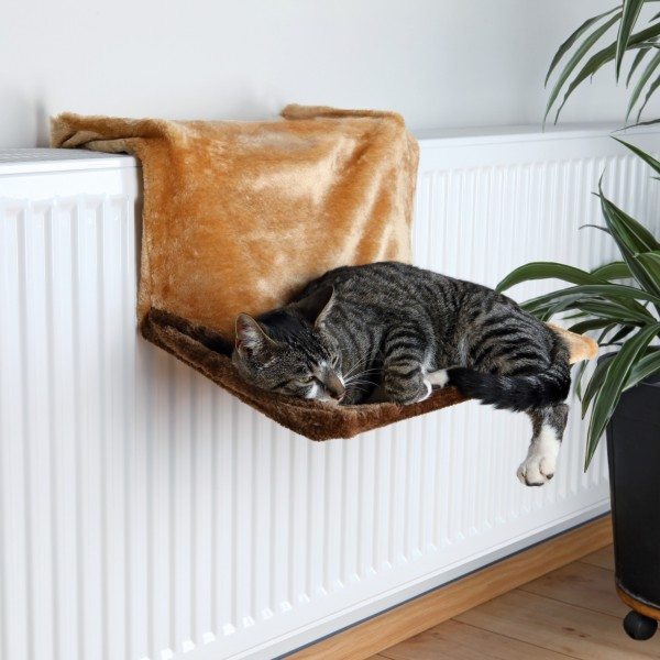 Radiaatori ase kassile